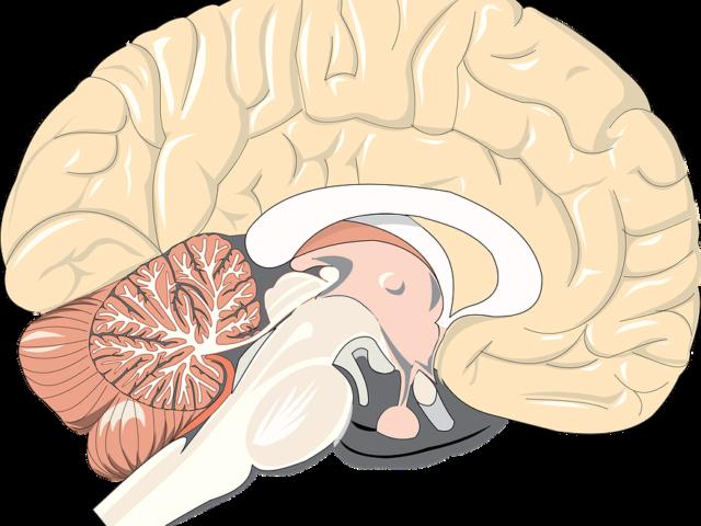 La prima infanzia (da 0 a 4 anni) è fondamentale per lo sviluppo della memoria
